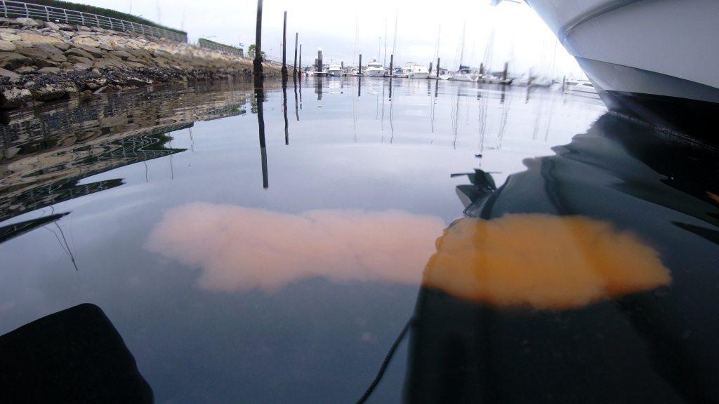 Marea roja de Noctiluca