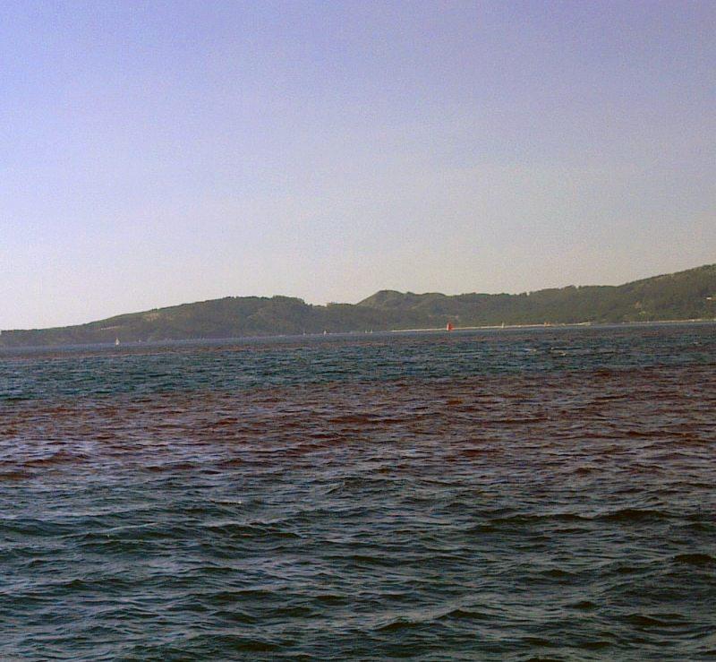 Fotografía Marea Roja